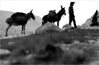 Everett w:burros
