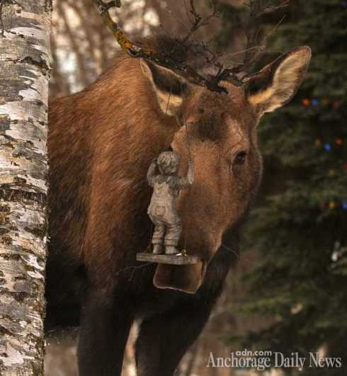 Moose vs Sculpture