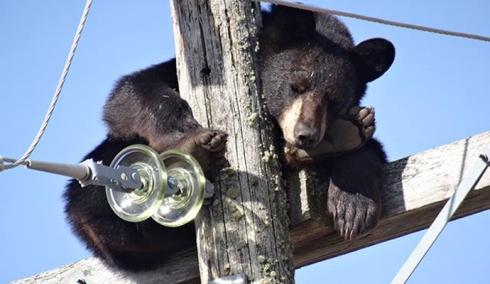 BearSnooze1