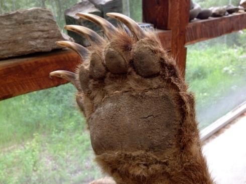 Griz paw