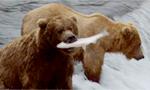 brown-bears_brooks_falls