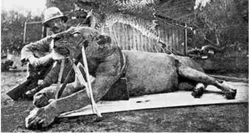 First Lion of Tsavo w/Lt.Col Patterson