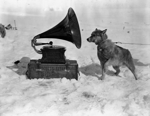 Sled Dog RCA Victor Imitation