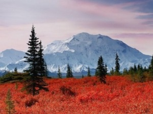 Mount-Mckinley-Fall-Colors