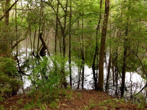 Ochlockonee River 2