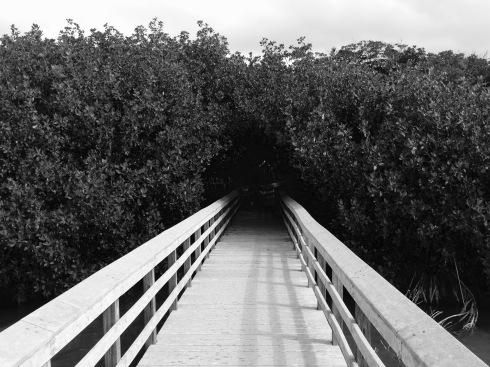 Everglade Tunnel