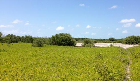 Coastal Plain hike