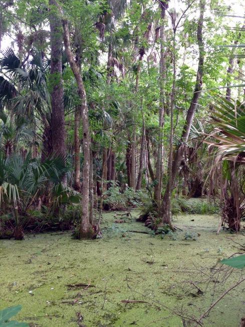 Wetlands in Highlands