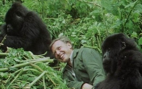 Attenborough w/gorillas