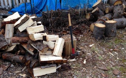 Spruce pile