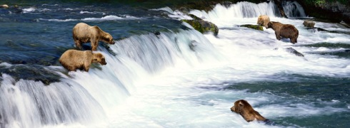 Brooks Falls in Katmai