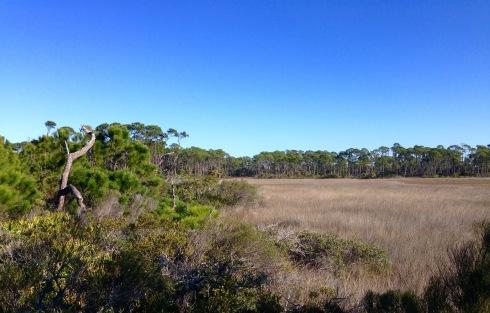Swamp & pines