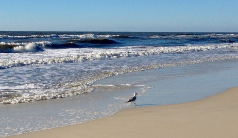 Gull on beach