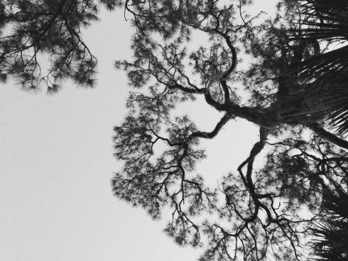 Looking upward