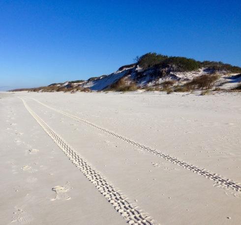 Tracks along beach