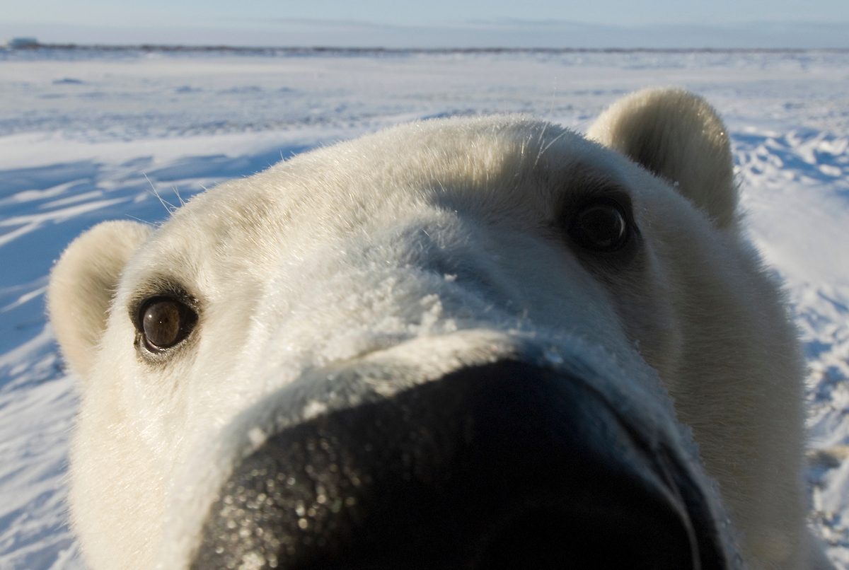International Polar Bear Day 2019